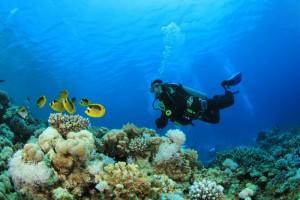 海洋生物学の ベスト コース 201...