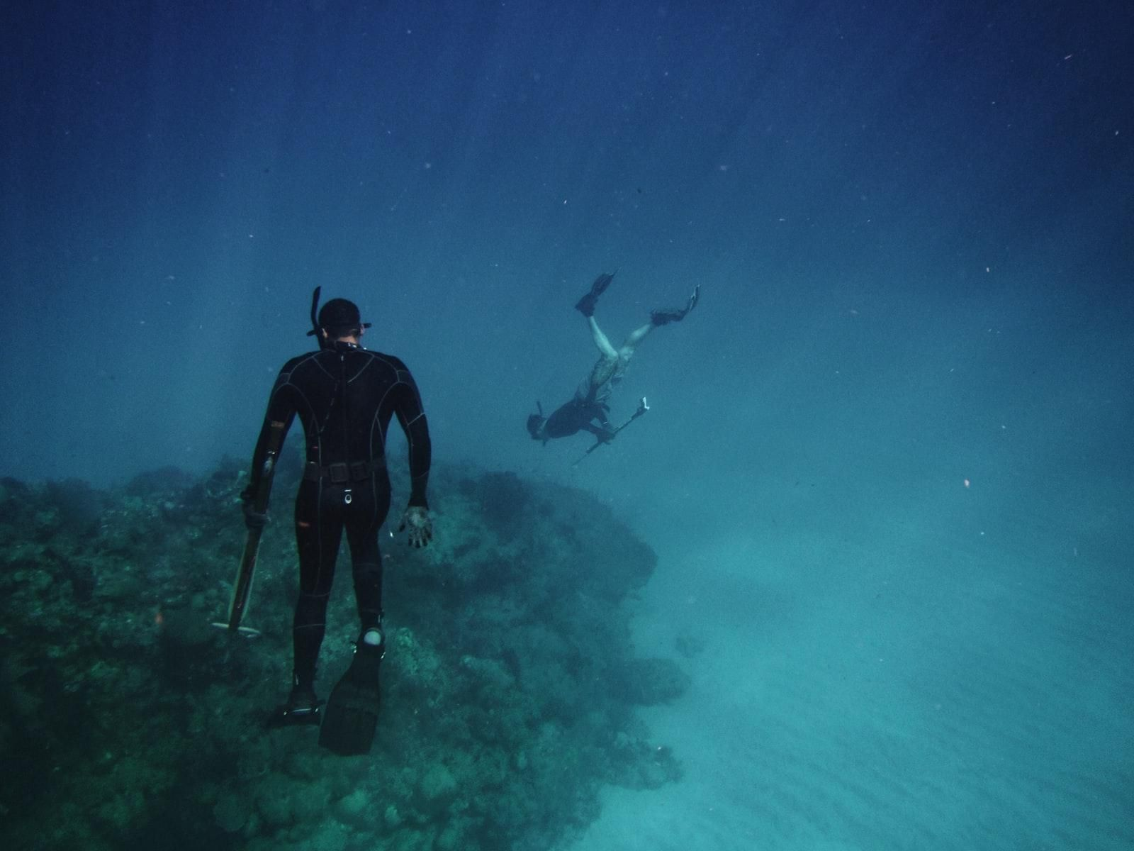 two free divers mid-hunt