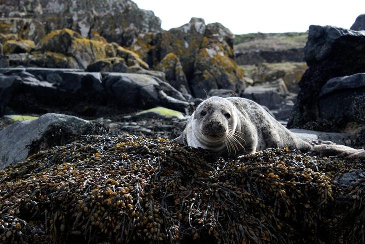 125997_closeup-photo-of-sea-lion-on-brown-rock-1045075.jpg